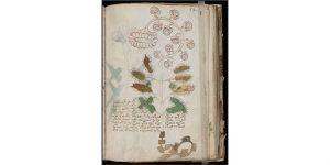 manuscrito vochny
